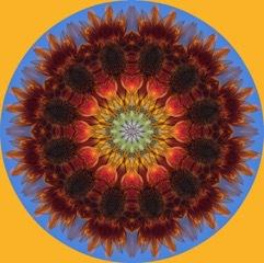 Sunflowerturn6.15